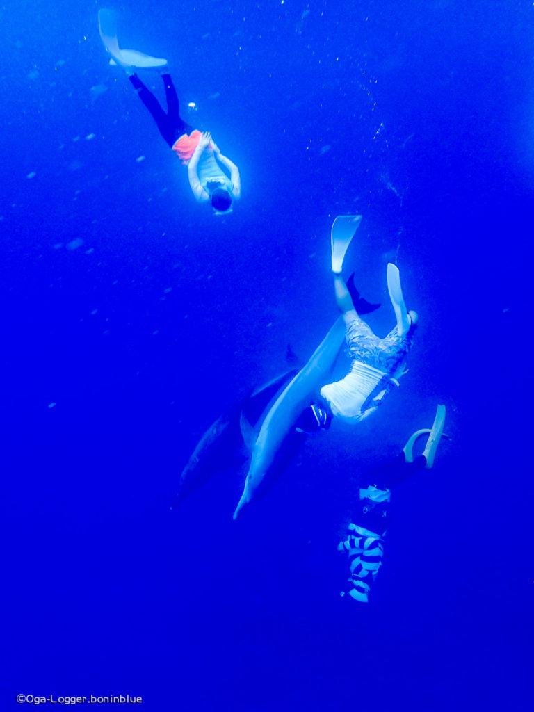 イルカと共に潜る