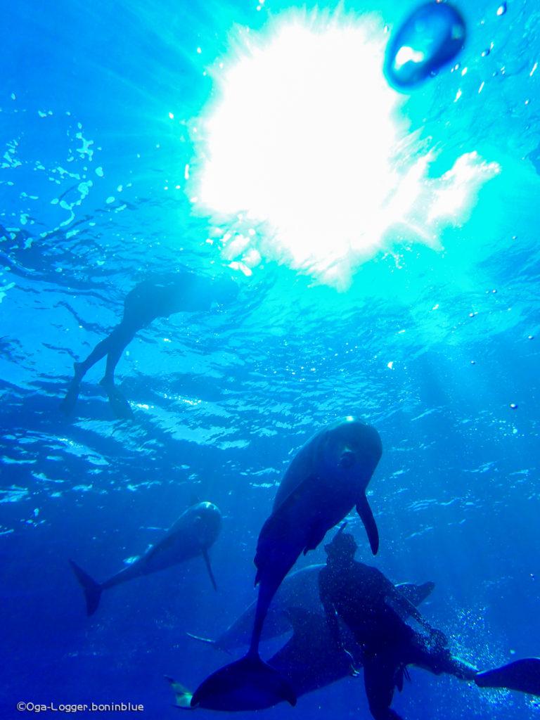 イルカ写真