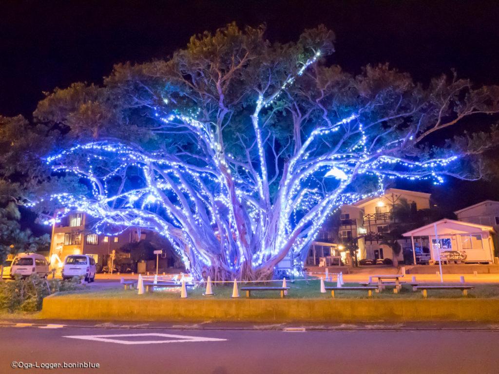 ガジュマルの樹・正面