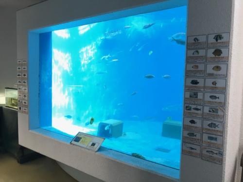 小笠原水産センターでは一番大きい水槽。ここにアオウミガメなど色々
